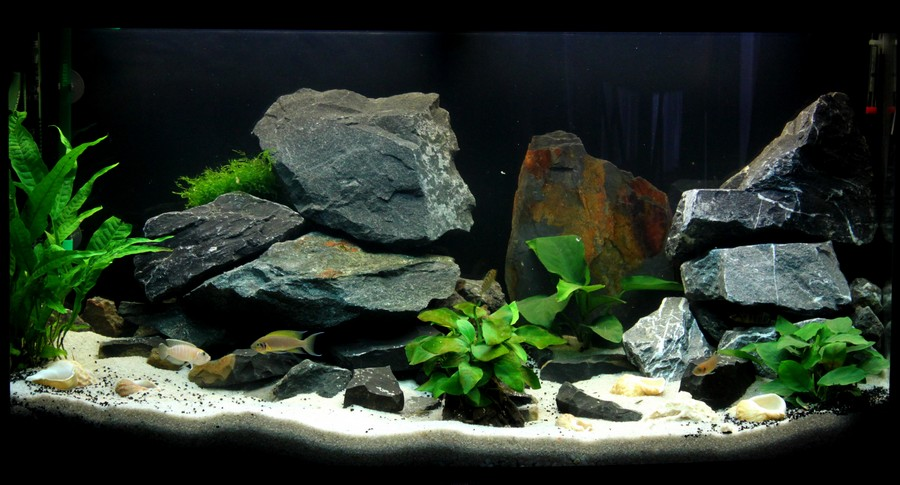 Projet aquarium encastr for Modele bac a poisson